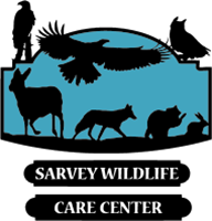 March Mission of the Month:  Sarvey Wildlife Care Center