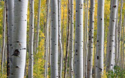 Our Spiritual Discipline: Be imitators of God